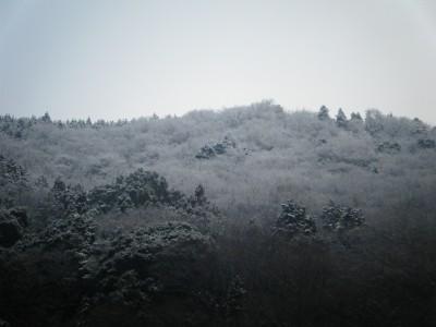 雪景色 須雲川対岸.jpg