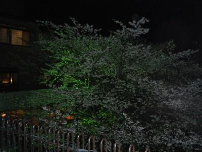 ホテルおくゆもと 夜桜.jpg