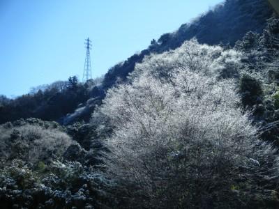 雪化粧した木々.jpg