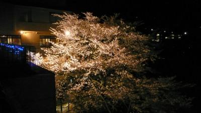 ホテルおくゆもとの夜桜.jpg